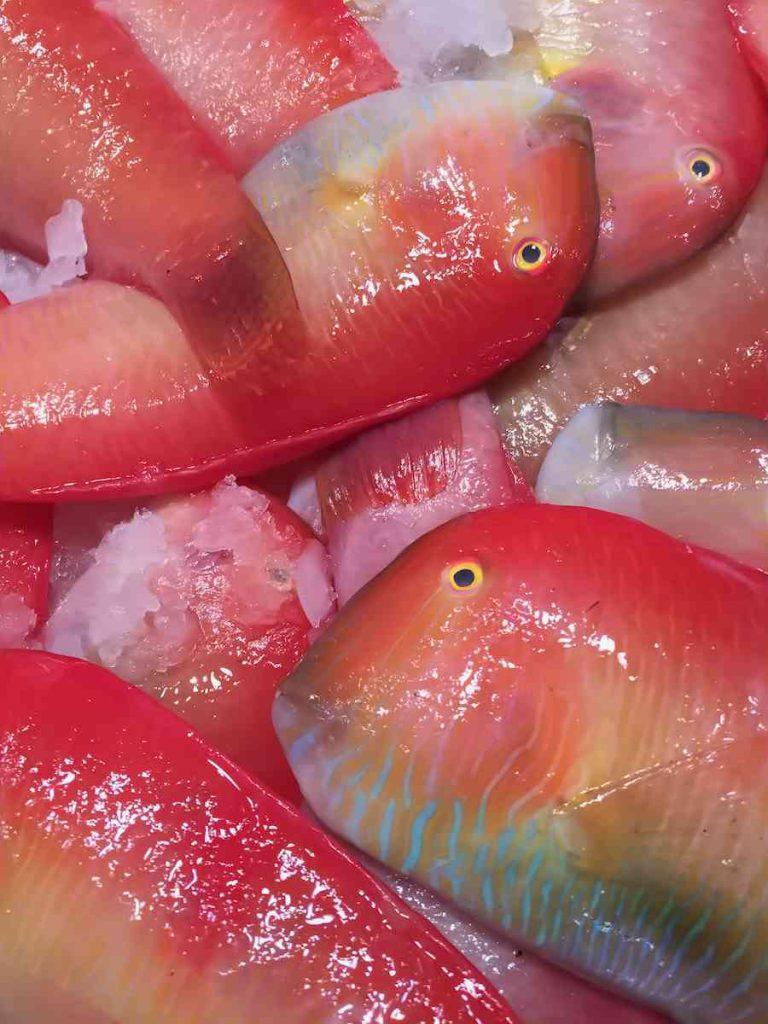 Raor fish at the market - Mallorca - Pollensa Private Chefs