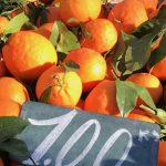 Mallorca Market Tours - Pollensa Private Chefs