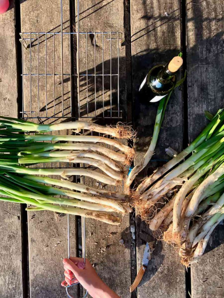 Calçots ready to cook on the barbecue